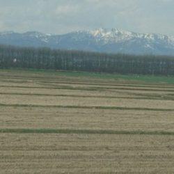 空知平野にも 春がきていました。