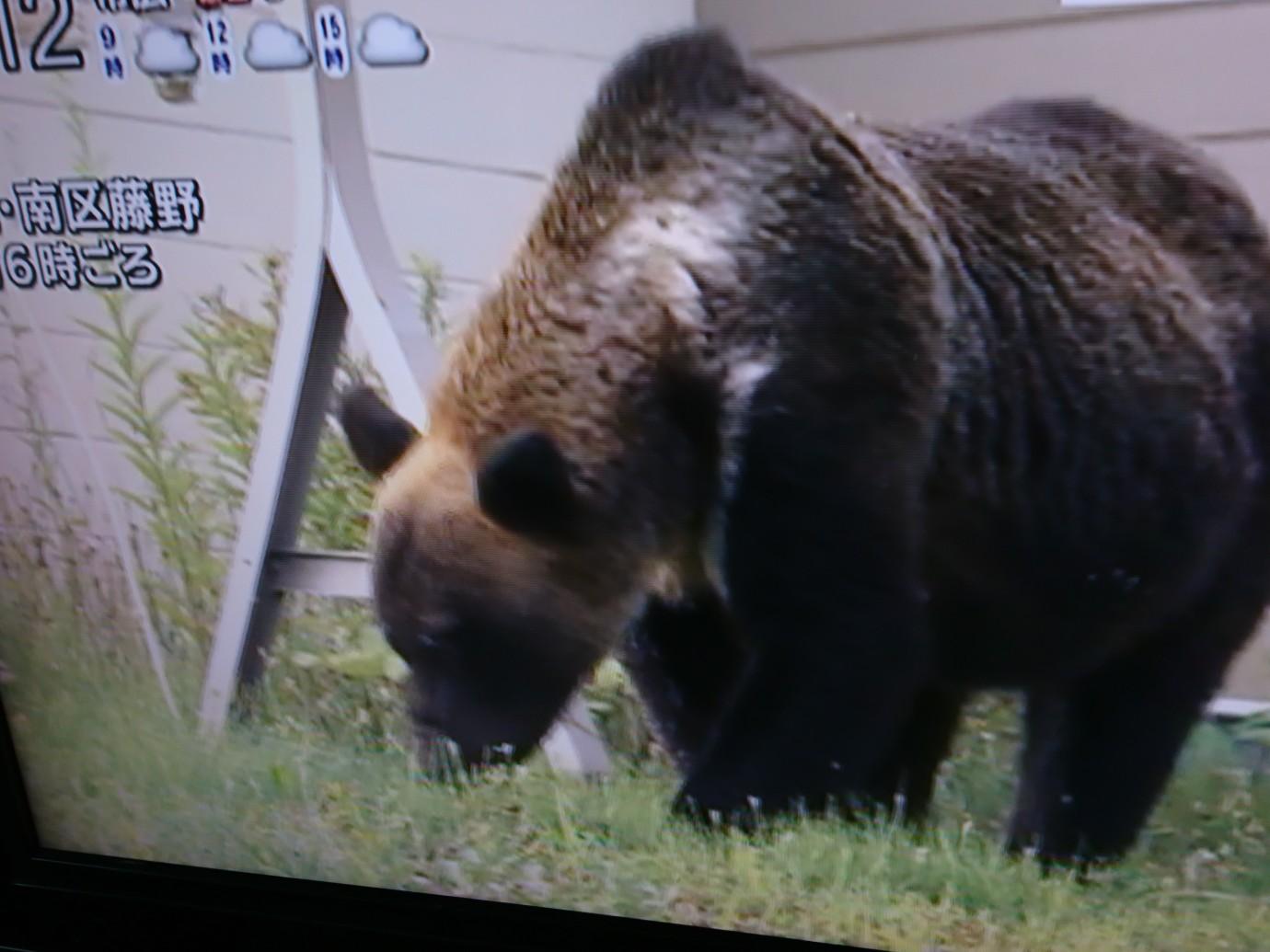 LIVE熊